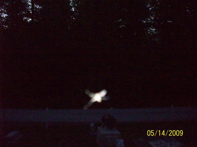 Bug Flare at Goll Woods