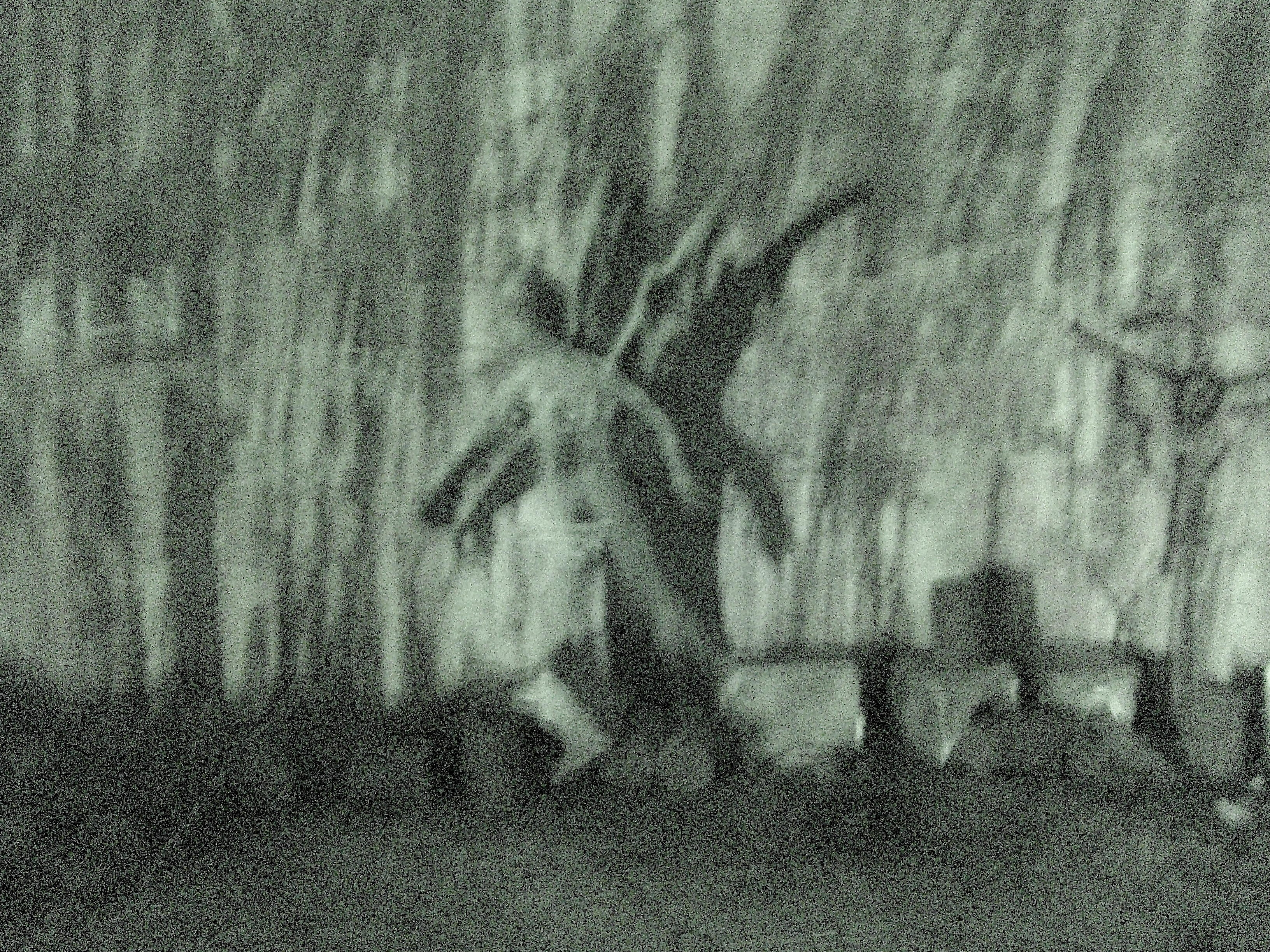 is mothman real or fake